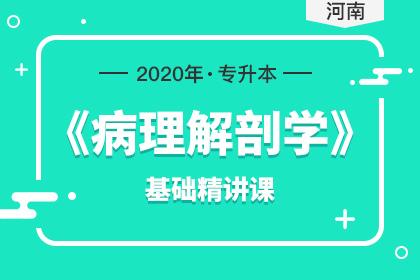 2020年河南专升本病理解剖学基础精讲课(预售)